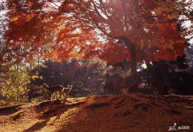 Todaiji Temple Nara Autumn